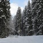 Romsilva susține oamenii şi mediul înconjurător