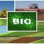 Asociația Bio: Alimentele eco, în atenția românilor