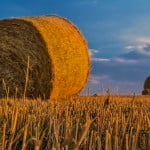 Care sunt riscurile și oportunitățile finanțării în agricultură?