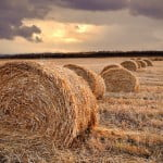 Producția agricolă a crescut