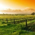 47,7 milioane euro pentru producătorii din sectorul vitivinicol