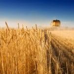 Constantin: Sperăm să fim din nou campionii Europei la producție agricolă