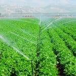 Sectorul agricol trebuie să identifice soluții de adaptare