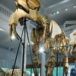 Noaptea Europeană a Muzeelor: Evenimentele speciale ale Muzeului Grigore Antipa