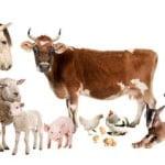 Numărul total de bovine, în creştere