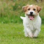 Amenzi pentru posesorii de animale care lasă mizerie pe domeniul public