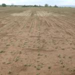 Monsanto ajută fermierii afectaţi de calamităţi