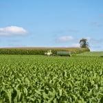 MADR: Este nevoie de compensaţii pentru fermierii afectaţi de secetă şi grindină