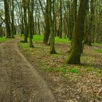Romsilva plantează peste 32 de milioane de copaci, în această primăvară