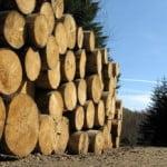 Amenzi de 16 milioane lei pentru tăierile ilegale de păduri
