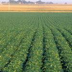 Rezultate financiare bune pentru divizia de Agri-Business a Agricover