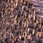 Guvernul amână aplicarea sistemului care asigură trasabilitatea materialelor lemnoase