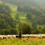 Acord între Veneto Banca şi APIA. Ce beneficii vor avea fermierii?