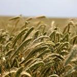 Creştere record pentru agricultura românească