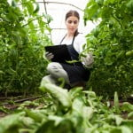 Marcoser, dinamism pe piața de inputuri și consultanță legumicolă profesională din România