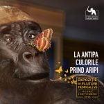 """Muzeul Antipa: Expoziţia """"Culorile prind aripi"""" începe de 18 iunie"""