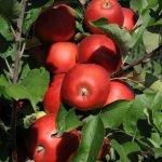 Ministerul Agriculturii: Nu orice conţinut de pesticid este un pericol pentru sănătate
