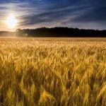 Ce fonduri europene şi ajutoare de stat pot accesa fermierii?