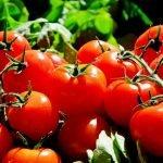 6 milioane de euro, ajutor de stat acordat pentru fermierii care cultivă roşii