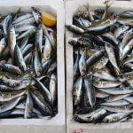 Kaufland, veste bună pentru cei care iubesc să mănânce peşte şi fructe de mare