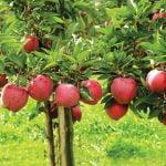 Sprijin financiar pentru producătorii de fructe